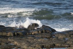 Craster Coastline